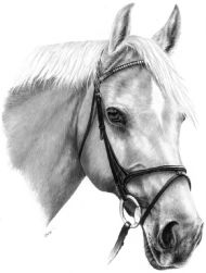horse portrait